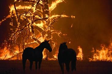 Resultado de imagem para Incêndios com várias frentes mantêm Austrália em estado de alerta