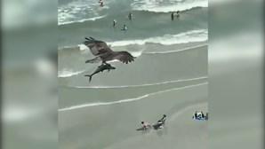 Águia imponente apanha tubarão com as garras e sobrevoa praia com ...